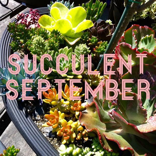 Succulent September