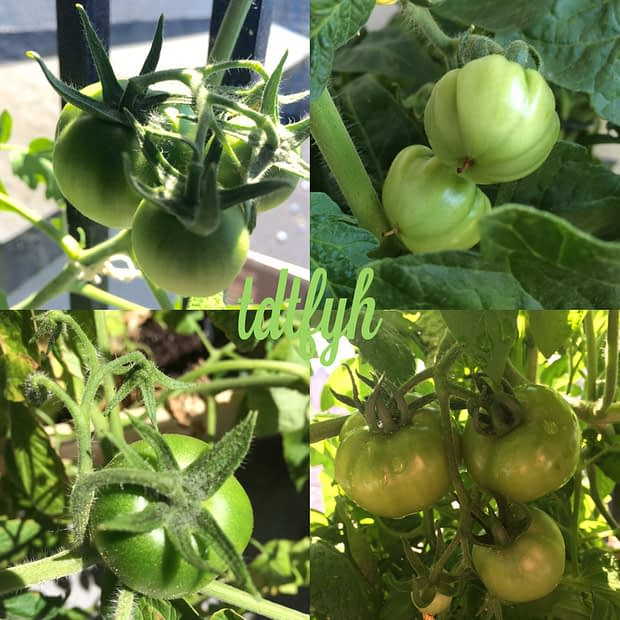 81. Grow tomatoes